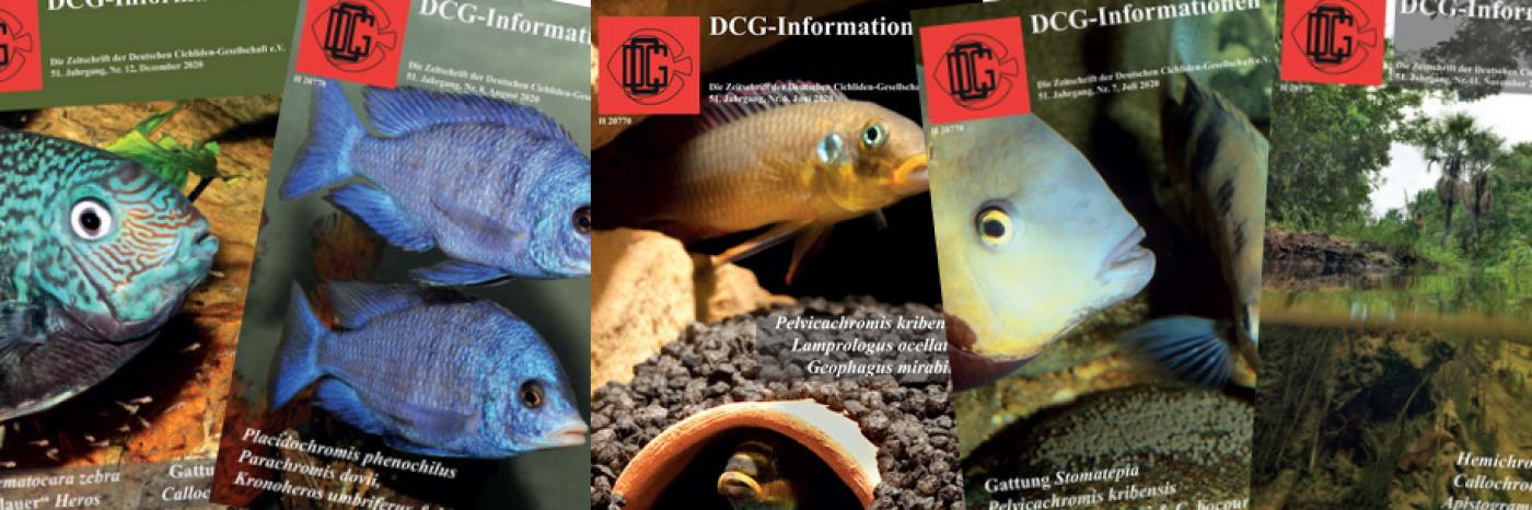 Unsere Vereinszeitschrift - Die DCG-Informationen
