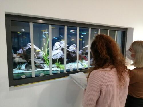 dcg-foerderpreis-schulaquaristik-2021-dillenburg-09-schülergruppe beim erheben von daten zum revierverhalten der männchen von l fuelleborni und m zebra