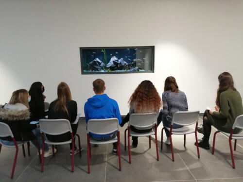 dcg-foerderpreis-schulaquaristik-2021-dillenburg-10-schülergruppe beim erstkontakt mit malawiseecichliden